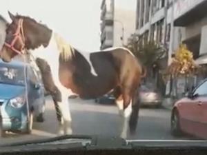 Ένα άλογο στους δρόμους της Θεσσαλονίκης!