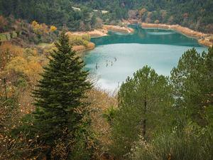 Τα δάση που προστατεύονται από το δίκτυο Natura - Πόσα βρίσκονται στη Δυτική Ελλάδα;
