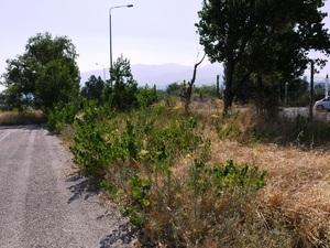 Πάτρα: Το χώρο του Κολυμβητηρίου θα περιποιηθεί ο Δήμος
