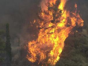 Φωτιά στο Μεσόκαμπο Σάμου - Επιχειρούν 4 καναντέρ και 2 ελικόπτερα