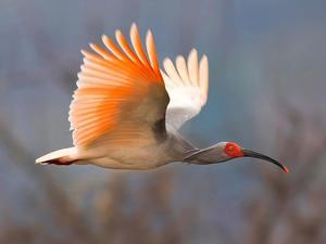 Τρία δισεκατομμύρια πουλιά εξαφανίστηκαν σε ΗΠΑ και Καναδά τα τελευταία 50 χρόνια