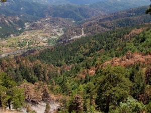 Μειωμένες οι δασικές εκτάσεις που καταστράφηκαν από φωτιά το 2019