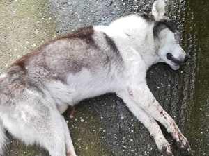 Δυτ. Ελλάδα: Σοκ από την αγριότητα σε βάρος αδέσποτου σκύλου (φωτο)