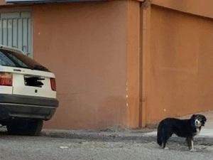 Αίγιο: Σκυλίτσα περιμένει ακόμα το αφεντικό της που πέθανε