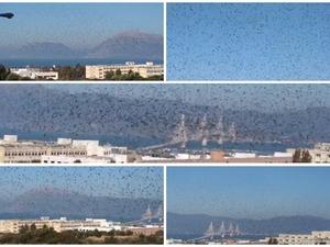 Χιλιάδες ψαρόνια πετούν στο ουρανό της Πάτρας (video)