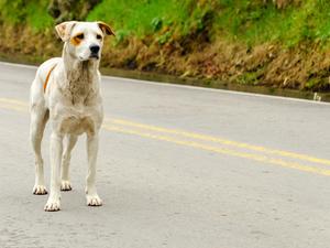 Πάτρα - 20χρονη δέχθηκε επίθεση από τρεις αδέσποτους σκύλους