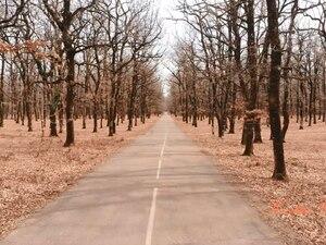 Το Δρυόδασος της Φολόης - Ένα από τα σπανιότερα της Ευρώπης (video)