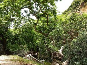Στη Νερομάνα της Κρήνης - Ένα μοναδικό μέρος στην Πάτρα, για απόδραση στη φύση!