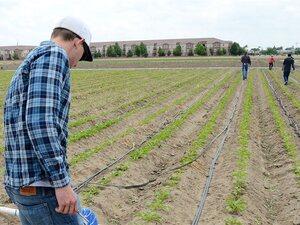 Επίδομα ανεργίας για όσους εργάζονται σε αγροτικές εργασίες