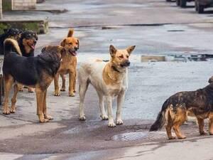 Δυτική Ελλάδα: 14χρονος που έκανε ποδήλατο δέχτηκε επίθεση από αδέσποτα σκυλιά