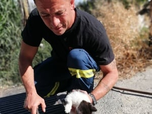 Πάτρα: Η ΕΜΑΚ έσωσε ένα μικρό γατάκι που είχε παγιδευτεί σε φρεάτιο