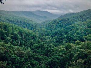 Περιβάλλον: Οι τροφές που καταστρέφουν τα δάση στις τροπικές γωνιές του πλανήτη