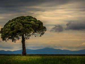 'Το δέντρο και ο Θωμάς'