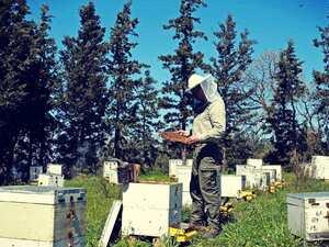 'Άγριες μέλισσες' κράτος και πανδημία για τους μελισσοκόμους της Αχαΐας!