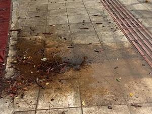 Πάτρα: Χάλια η είσοδος στο δημοτικό σχολείο του Σαραβαλίου (φωτό)