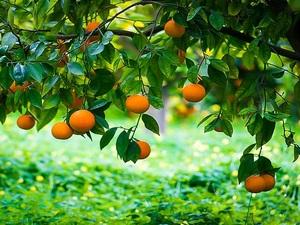 Τρία φρούτα - πρωταθλητές με αντιφλεγμονώδη δράση