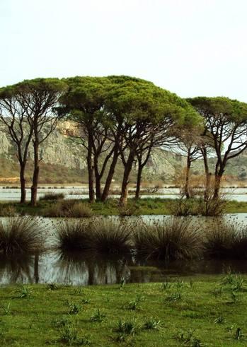 Γιόγκα στο Δάσος - Καθαρισμός Καλόγριας