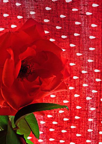 Ο Μυστικός μου Κήπος - Λουλούδια με Φωτοστέφανο στην Γκαλερί Cube