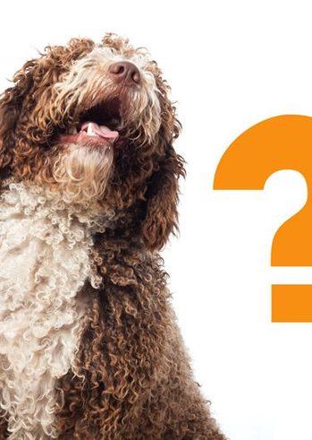 Τι είναι η θετική εκπαίδευση;! Απαντήσεις στις ερωτήσεις σας στο Mynewdog Positive Training - Εκπαίδευση/Ψυχολογία/Συμπεριφορά Σκύλων