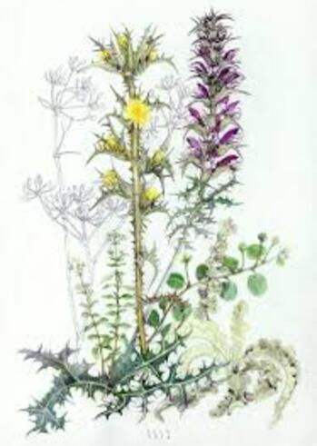 Botanical Rhapsody: Ομαδική έκθεση στο Παλαιοπωλείο Μαρτίνος