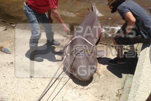 Φωτογραφίες - Έπιασαν καρχαρία στην Ιθάκη!
