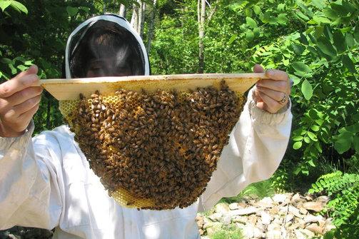 Το μέλι 'κεντρί' για την οικονομία της Αχαΐας; - Πού 'κολλάει' η ανάπτυξή του