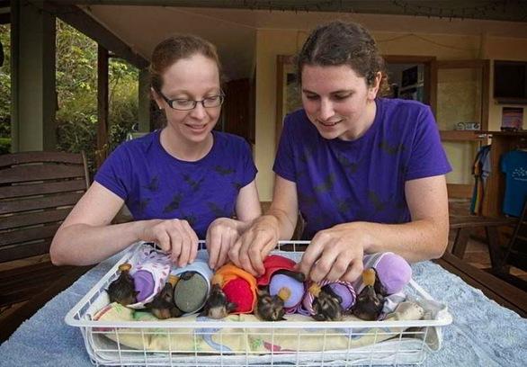 Αυστραλία: Ένα ξεχωριστό νοσοκομείο για... εγκαταλελειμμένες νυχτερίδες (pics)