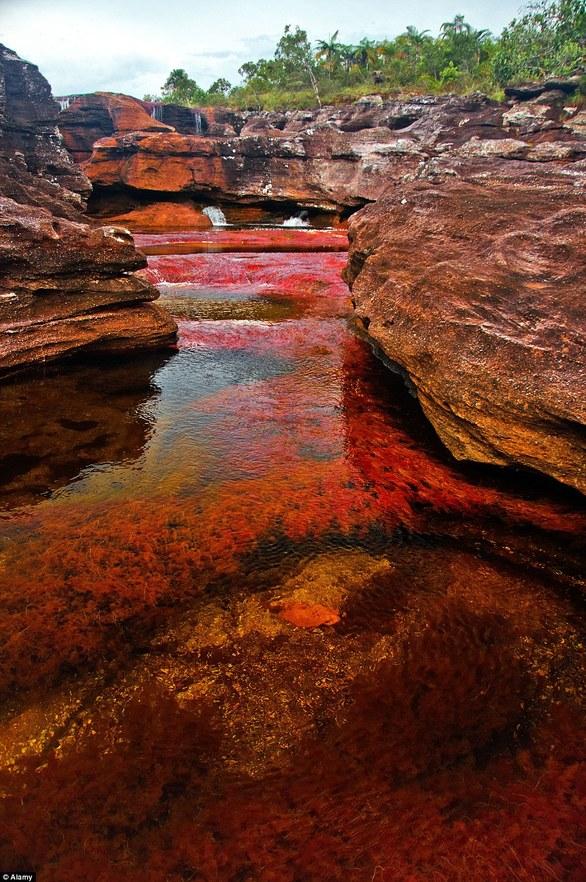 Το πολύχρωμο ποτάμι της Κολομβίας που ξετρελαίνει τους τουρίστες (pics+vids)