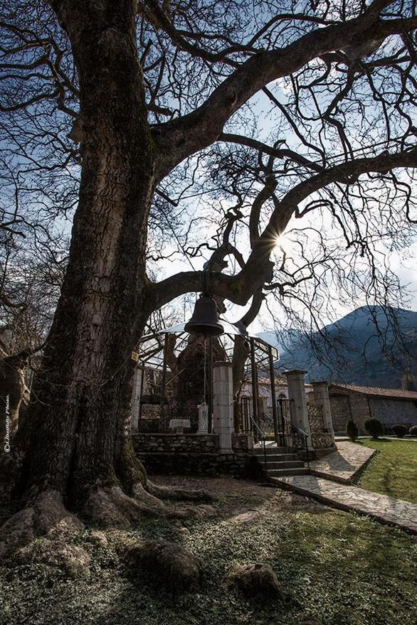 Ξεχωριστό θέαμα στην Αχαΐα - Μια εκκλησία μέσα σε ένα μεγάλο δέντρο!