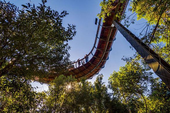 Κάνοντας πεζοπορία πάνω στα... δέντρα! (pics)