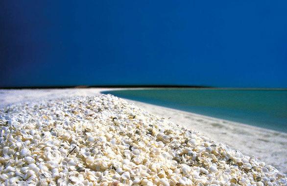 Το νερό εκεί δεν περιέχει τόσο αλάτι, έτσι οι αχιβάδες είναι σε θέση να πολλαπλασιάζονται ανεξέλεγκτα από τους φυσικούς θηρευτές του. Η αφθονία των μαλακίων πλημμυρίζει την παραλία με τα κελύφη τους.