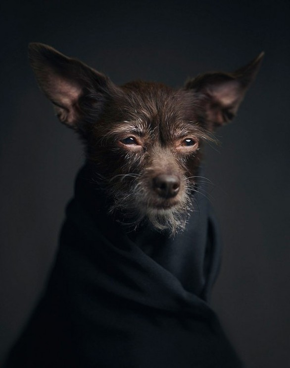 Ο Vincent Lagrange φωτογραφίζει ζώα σαν να είναι άνθρωποι (pics)