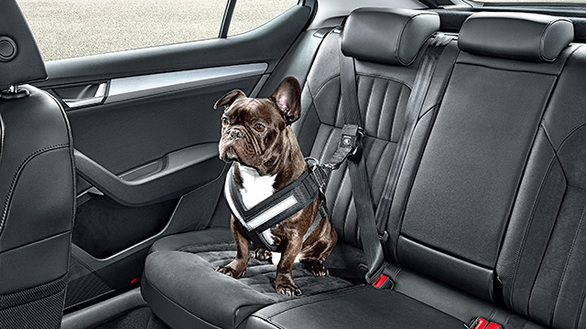Πως θα μεταφέρετε τον σκύλο σας με το αυτοκίνητο; (pics)