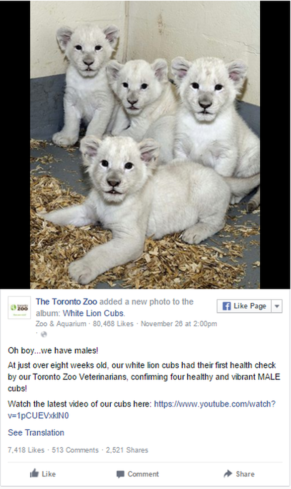 Η φωτογραφία είναι από τη σελίδα του Toronto Zoo στο Facebook