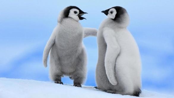 Μαγικές φωτογραφίες με πρωταγωνιστές τους πιγκουίνους!
