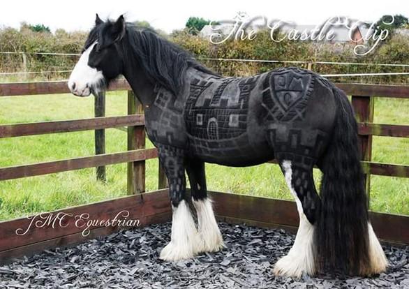 Καλλιτέχνης δημιουργεί εντυπωσιακά κουρέματα σε άλογα (pics)