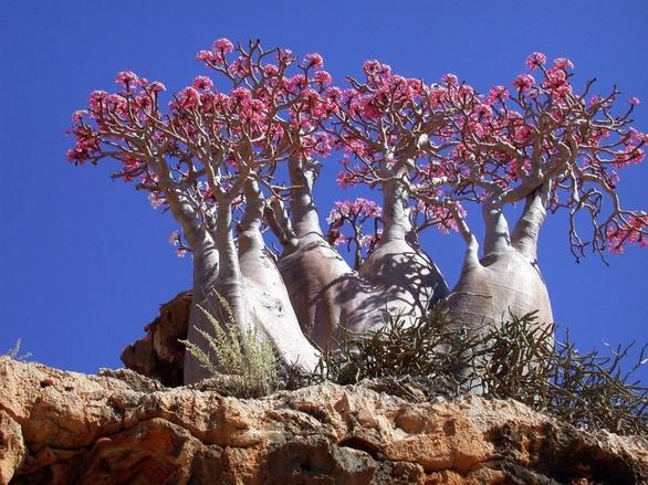 Όταν η φύση έχει κέφια, δημιουργεί… δέντρα τέχνης (pics)