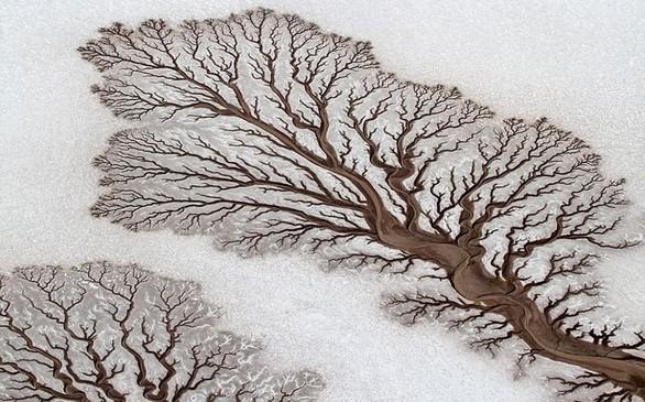 Μοιάζει με παράξενο δέντρο πάνω στο χιόνι αλλά στην πραγματικότητα είναι οι απολήξεις ποταμού στην έρημο της Baja California στο Μεξικό.