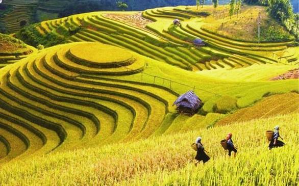 Οι εντυπωσιακοί ορυζώνες που θα συναντήσεις στο Βιετνάμ (pics)