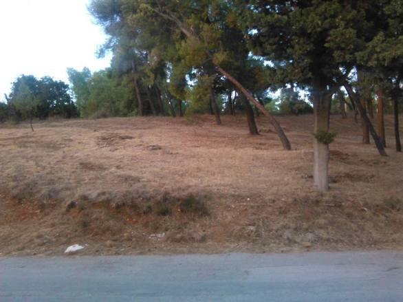 Πάτρα: Καθάρισαν τον χώρο και τους δρόμους γύρω από την μονή στο Γηροκομειό (pics)