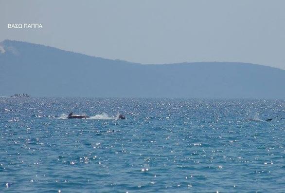 """Όταν τα δελφίνια """"χορεύουν"""" στο κύμα, στη θάλασσα του Μύτικα (pics)"""