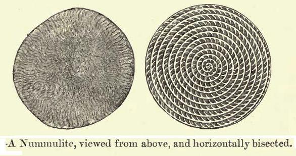 Ημερολόγιο χρονομηχανής 56 εκατομμύρια χρόνια Π.Χ. Γεωλογική περίοδος: Ηώκαινο , οργανισμός μελέτης: Νουμουλίτες