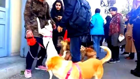 Πάτρα: Τα αδέσποτα έκαναν... στάση στο Δημαρχείο - Διαμαρτυρία φιλόζωων στην Μαιζώνος (pics)