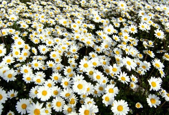 Η χλωρίδα της Πάτρας (pics)