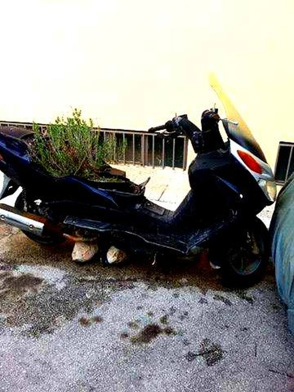 Το… μηχανάκι γλάστρα που κοσμεί δρόμο της Πάτρας - Δείτε φωτο