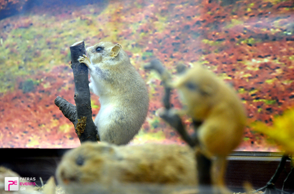 Ξενάγηση στο Ζωολογικό Μουσείο του Πανεπιστημίου Πατρών