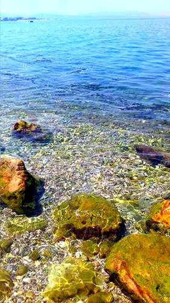 Καταγγελία: Γέμισε «μαυρίλες» η θάλασσα στην Τερψιθέα της Πάτρας (pics)