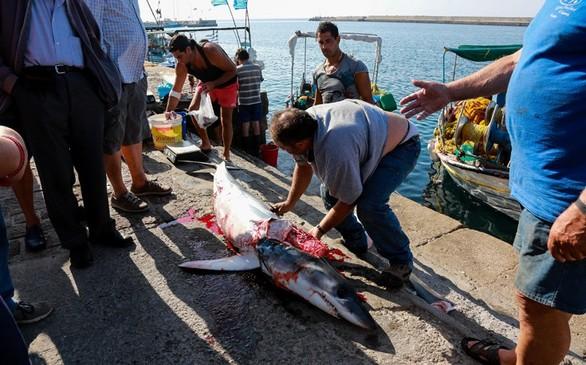 Λέσβος: Ψάρεψαν καρχαριοειδές 80 κιλών (pics)