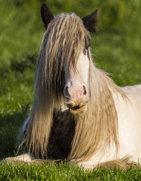 Παράξενα άλογα με… μουστάκι! (φωτο)