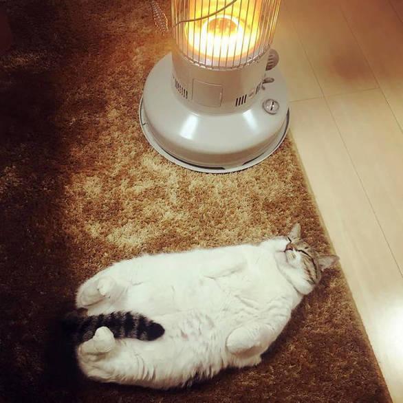 Γάτος ερωτεύτηκε... μια σόμπα (φωτο)
